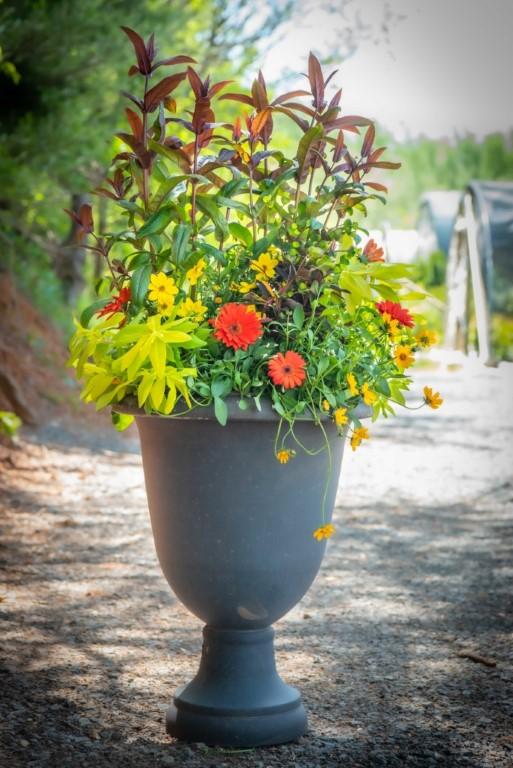 Spring Sun Container with Beardtongue, Hypericum, Brigadoon, Bidens, Gerbera Daisy, Euphorbia