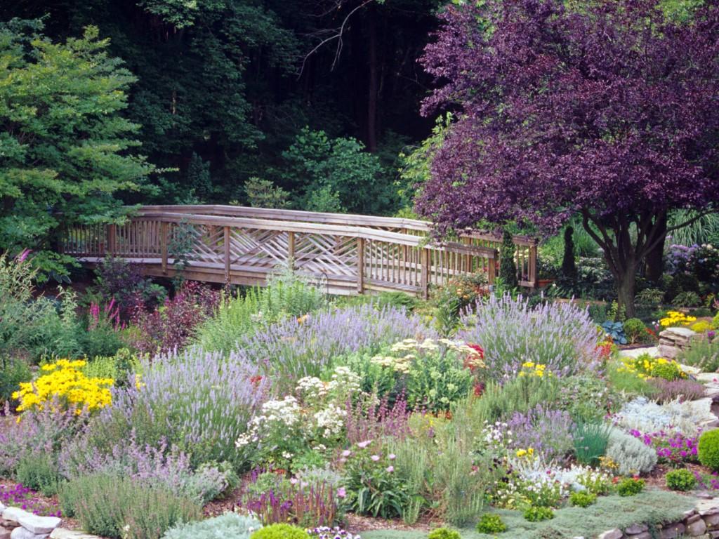 Perennial Garden with Bridge