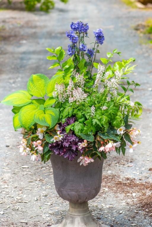 Perennial Shade Container: Hosta, Japanese Holly Fern, Jacob's Ladder, Foam Flower, Heuchera & Annual Begonia,