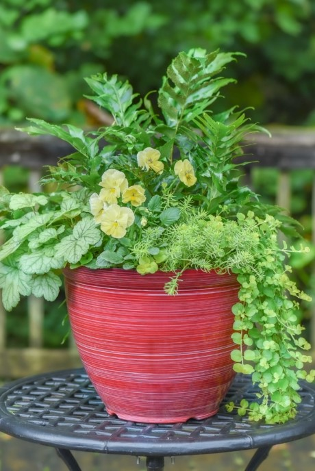 Shade Container with Creeping Jenny, Japanese Holly Fern, Heuchera and Pansies